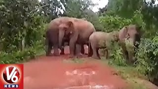 Elephants Group Hulchul In Mayurbhanj District, Damage Crops and Houses | Odisha