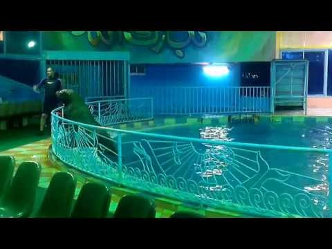 عروض قرية الدولفين بالدمام 04-08-2014 Dolphin Show - Dammam