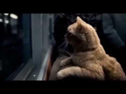 Inside Llewyn Davis: red cat