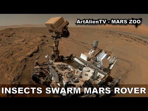 MARS INSECTS SWARM CURIOSITY ROVER: UFO's, Birds or Flies? ArtAlienTV - MARS ZOO 1080p