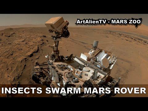 MARS INSECTS SWARM CURIOSITY ROVER SELFIE: UFO's, Birds or Flies? ArtAlienTV 1080p