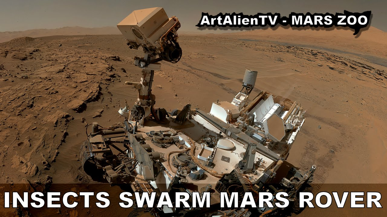 Insect Fossils on Mars Mars Insects Swarm Curiosity