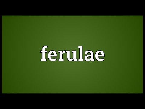 Header of ferulae