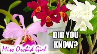 Did you know this about: Cattleya Orchids?