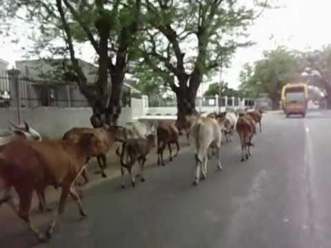 INDIA ON CROSSROADS