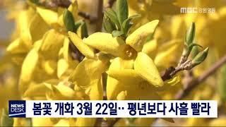 올해 도내 봄꽃 개화 평년보다 사흘 빨라
