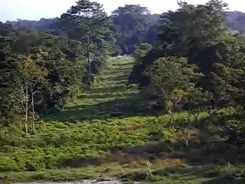 Memorable Trip at Gorumara National Forest