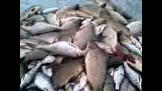 рыбалка в баканасе видео