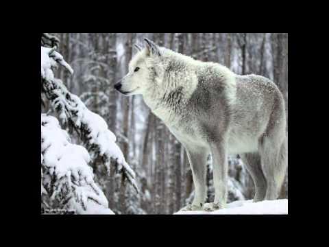 Aaskereia - Des Waldes Frostiger Hauch