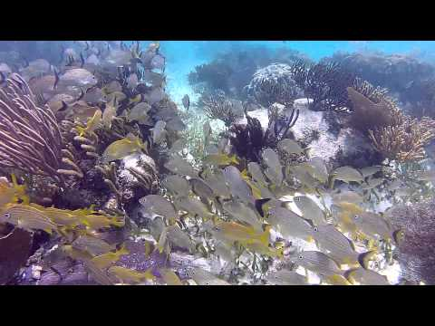 Puerto Morelos Reef, Mayan Riviera, Mexico   Caribbean Snorkeling. Buceando En Puerto Morelos.