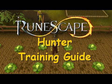 Runescape Training Guide: 1-99 Hunter [Legacy Mode and EOC] – Runescape iAm Naveed