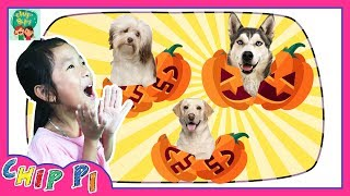 Learn Animals Dogs Family for Kids Name and Sounds Animal Videos