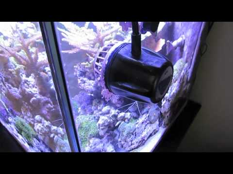 Solana 34 Gallon Reef Aquarium Build