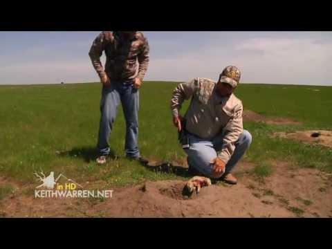 GLOCK vs. Prairie Dogs   Hunting in North Dakota