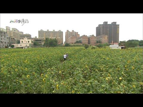 MIT台灣誌-20141214 EP 652 老茶嫩葉 飄香百年 桃氣土地公 好神