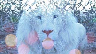 Lions Gate Transmission Meditation and Activation