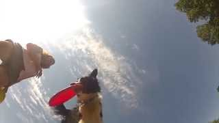 GoPro 2 & 3 Black slowmotion dogfrisbee video