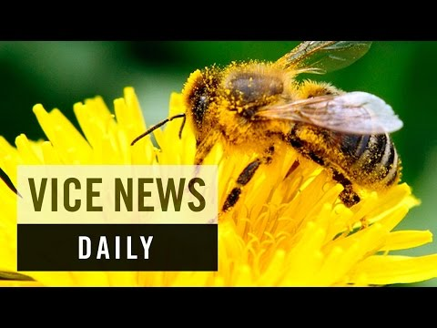 VICE News Daily: Saving America's Honeybees
