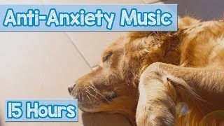 Calming Music for Puppies with Anxiety! Soothing Lullabies for Anxious and Stressed Dogs! (Tested)  from Relax My Dog - Relaxing Music for Dogs