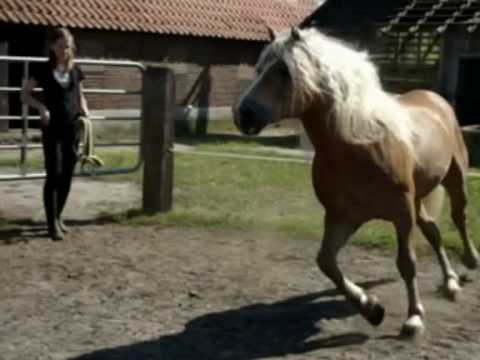 My Friend Lisa - The Ride