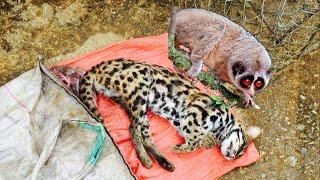 Cu Li, Mèo Rừng, Gà Rừng    Chợ Thú Rừng Bậc Nhất Biên Giới Viêt Trung