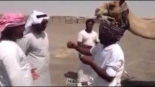 Must Watch : Sindhi funny arab dubbed video