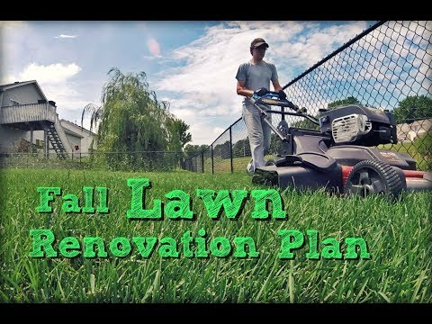 Fall Lawn Care Renovation Tips - A Step by Step Plan to Improve Your Lawn