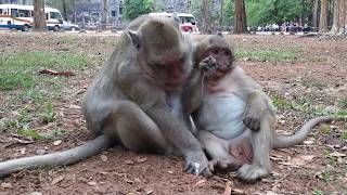 What Big monkey Doing On SweetPea monkey?SP Try To not Laughter,
