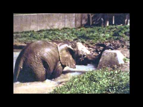 Cleveland Metroparks Zoo 1983 Moments Blackie the Hippo Zoo Keepers