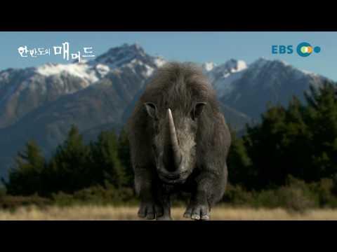 한반도의 매머드_The Mammoth_Teaser_EBS_KOREA