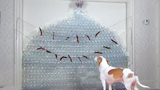 Dog Gets Christmas Tree Made of 800 Bottles: Cute Dog Maymo