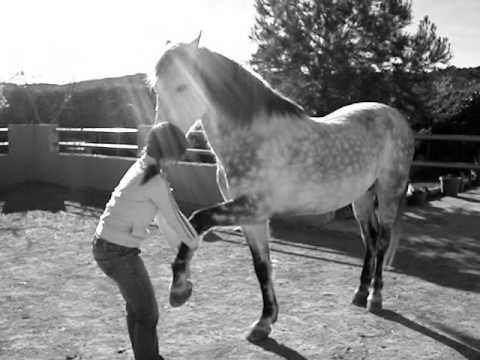 -Free Horse- (doma natural) -libertad-