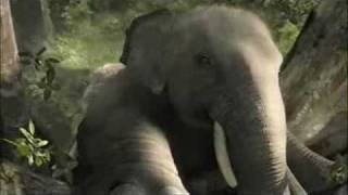 Funny Advertising Video Elephant - LG Electronics