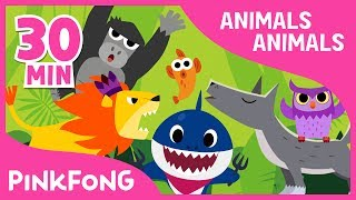 download lagu Animals, Animals  Baby Shark And More  +compilation gratis