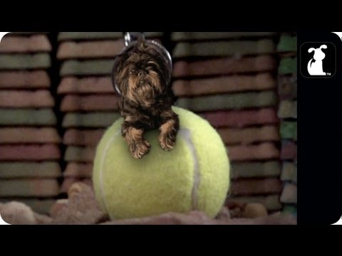 "Miley Cyrus - Wrecking Ball Parody - ""Tennis Ball"""