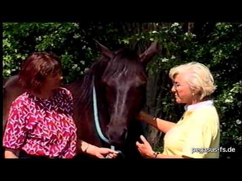 Linda Tellington-Jones: Die Persönlichkeit des Pferdes, Teil 2
