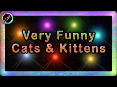 cute and funny cats and kittens. Very Funny Cats Funny Kittens