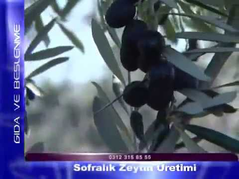 Sofralık zeytin üretimi.avi
