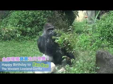 台灣-臺北市立動物園-EP 004 金剛猩猩寶寶30歲生日快樂