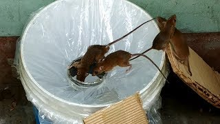 Best Idea Trap Easy Saving Rat🐀Rat trap 1 gate🐀Stupid Mouse Trap🐭Good idea Mouse Trap