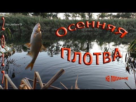 рыбалка осенью,плотва на поплавок