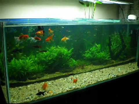 Planted Aquarium Diana Walstad Method Youtube