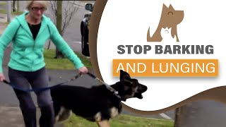 How to STOP your dog barking/ lunging at visitors & dogs; aggression