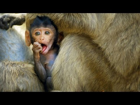Don't Be Jealous of These Oyster-Slurping Beach Monkeys
