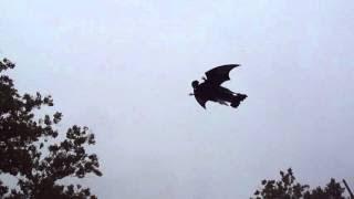 Grim Reaper Halloween RC Plane. Front yard flying. Plans foamconceptjets.com