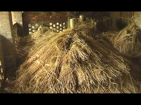 Potato Storage in India