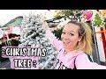 Shopping for Christmas Trees! Vlogmas Day 5!!