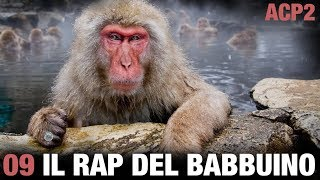 ANIMALI CHE PARLANO 2 –Il rap del babbuino