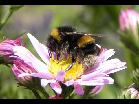 Overwhelming Evidence Shows Pesticides Are Destroying Bees