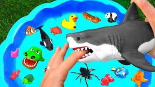 Learn Wild Zoo Animals and Sea Animals For Kids with Shark Toys